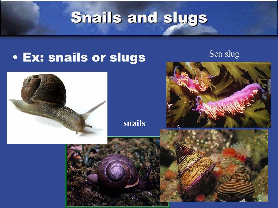 Snails and slugs Ex: snails or slugs snails Sea slug