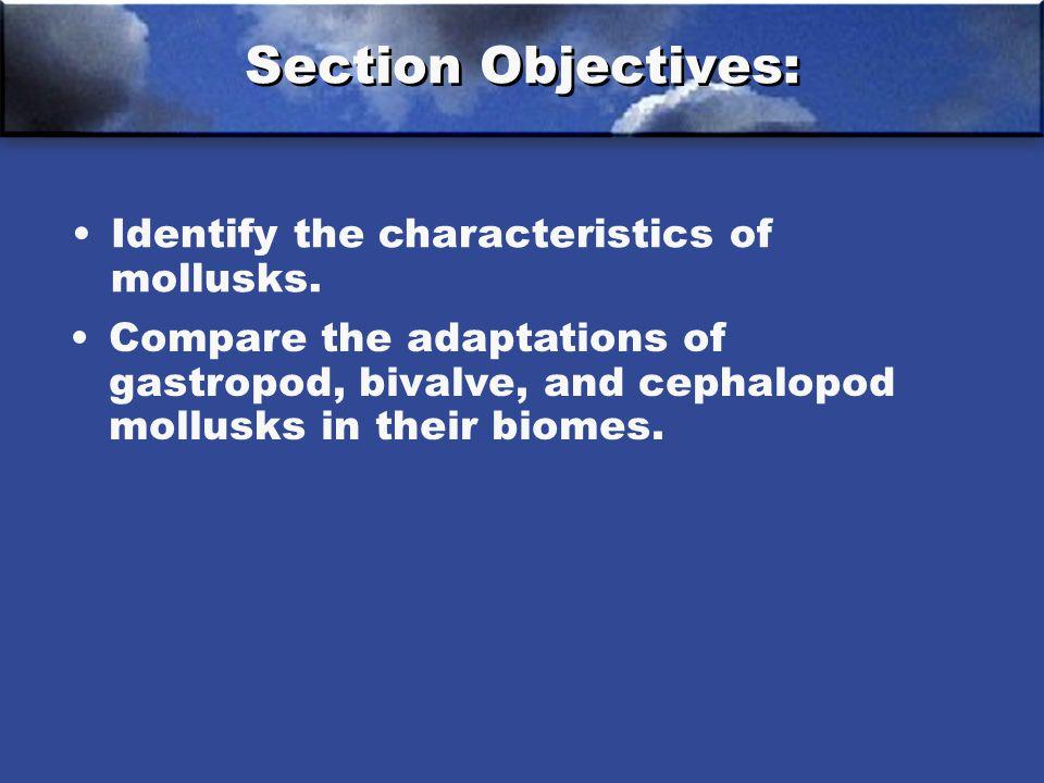 Identify the characteristics of mollusks.