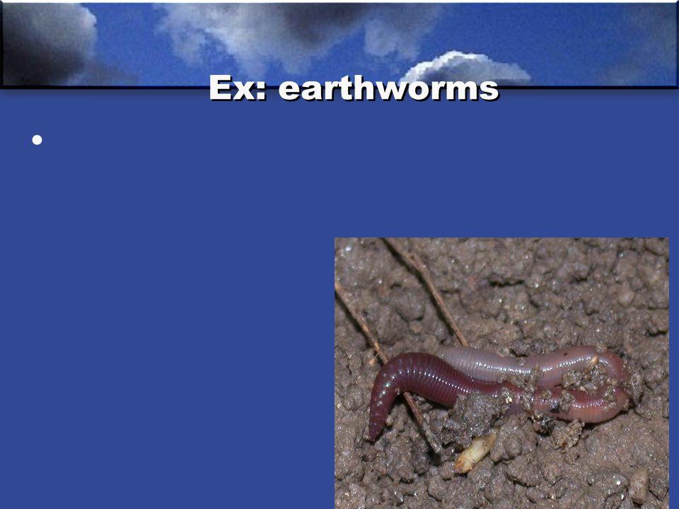 Ex: earthworms