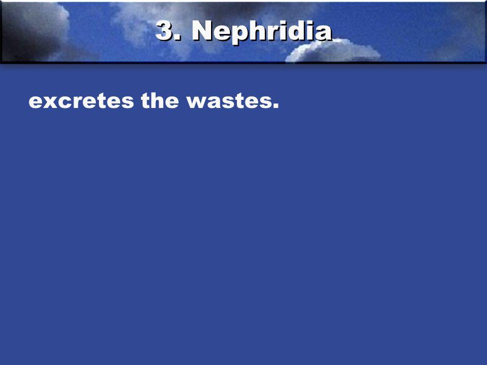 3. Nephridia excretes the wastes.