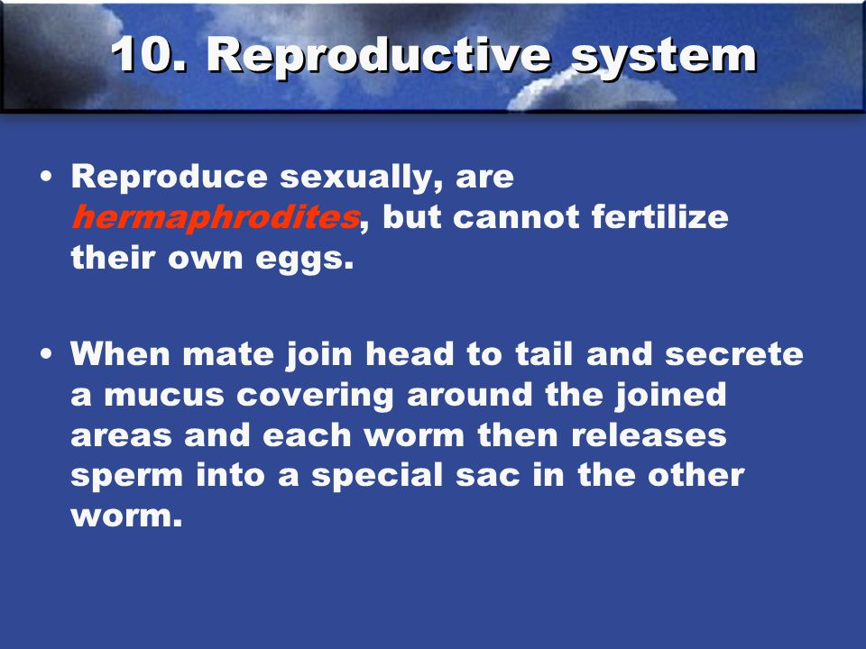 10. Reproductive system Reproduce sexually, are hermaphrodites, but cannot fertilize their own eggs. When mate join head to tail and secrete a mucus c
