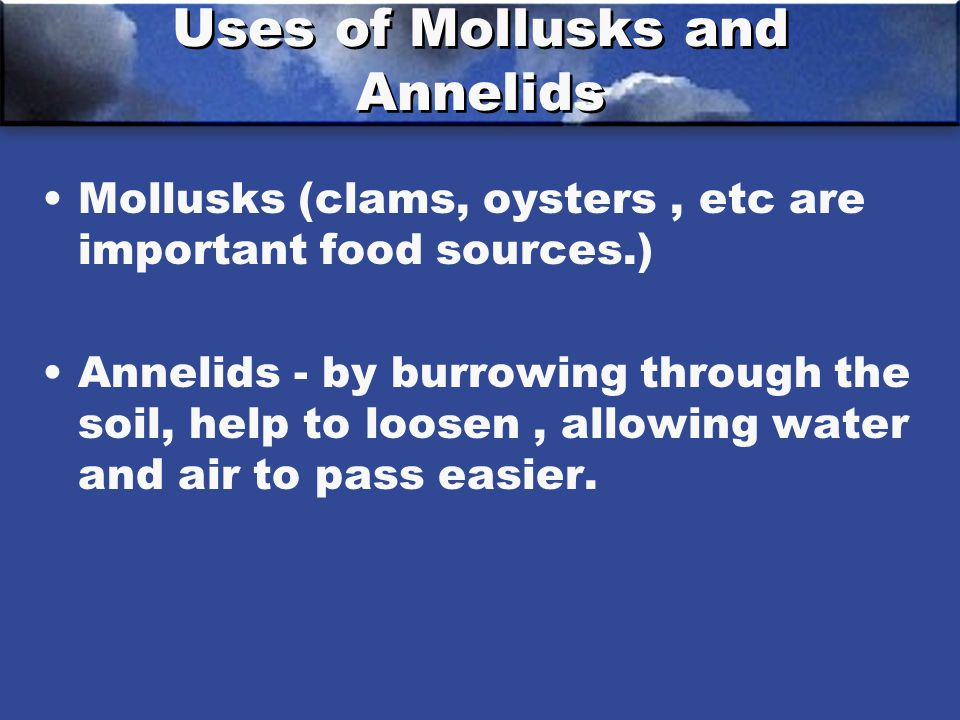 Uses of Mollusks and Annelids Mollusks (clams, oysters, etc are important food sources.) Annelids - by burrowing through the soil, help to loosen, allowing water and air to pass easier.