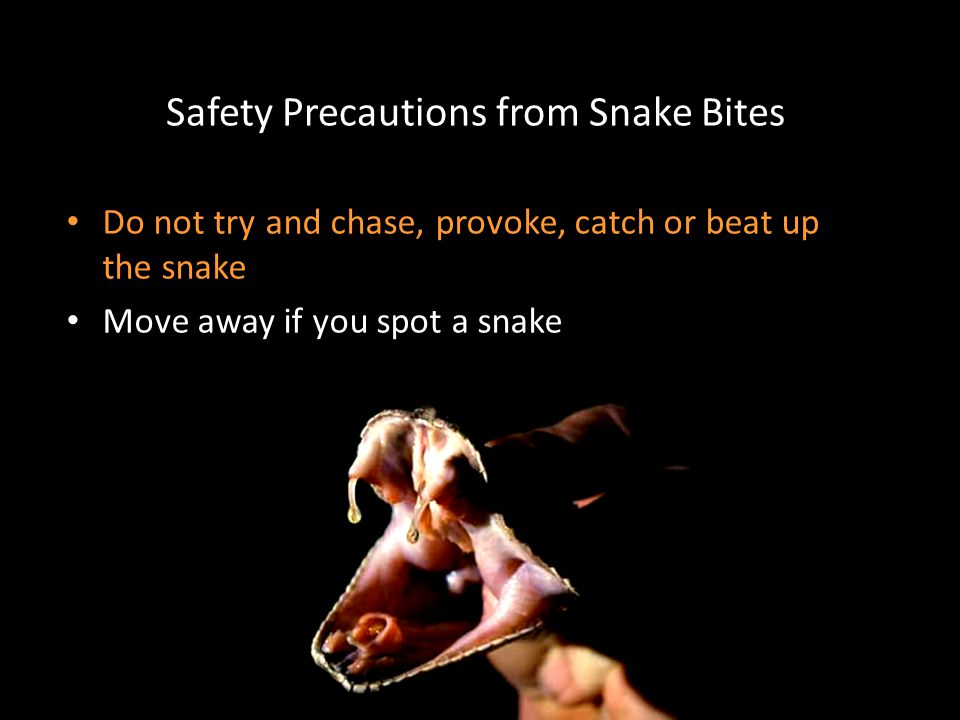 Safety Precautions from Snake Bites Do not try and chase, provoke, catch or beat up the snake Move away if you spot a snake
