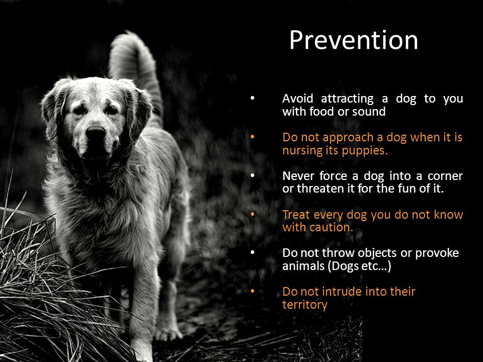 Prevention Avoid attracting a dog to you with food or sound Do not approach a dog when it is nursing its puppies. Never force a dog into a corner or t