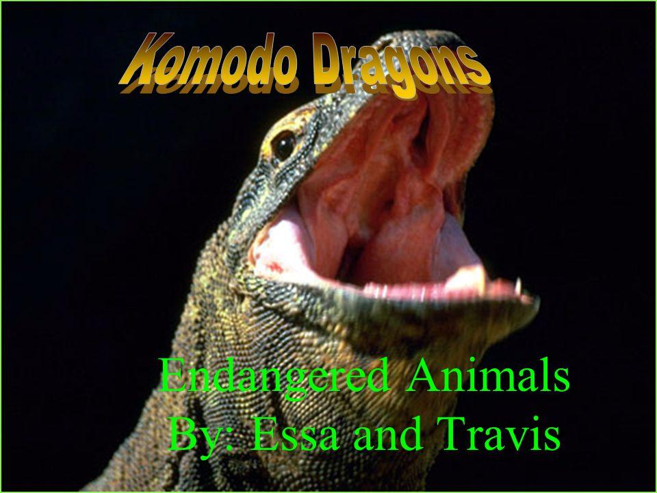 Endangered Animals By: Essa and Travis