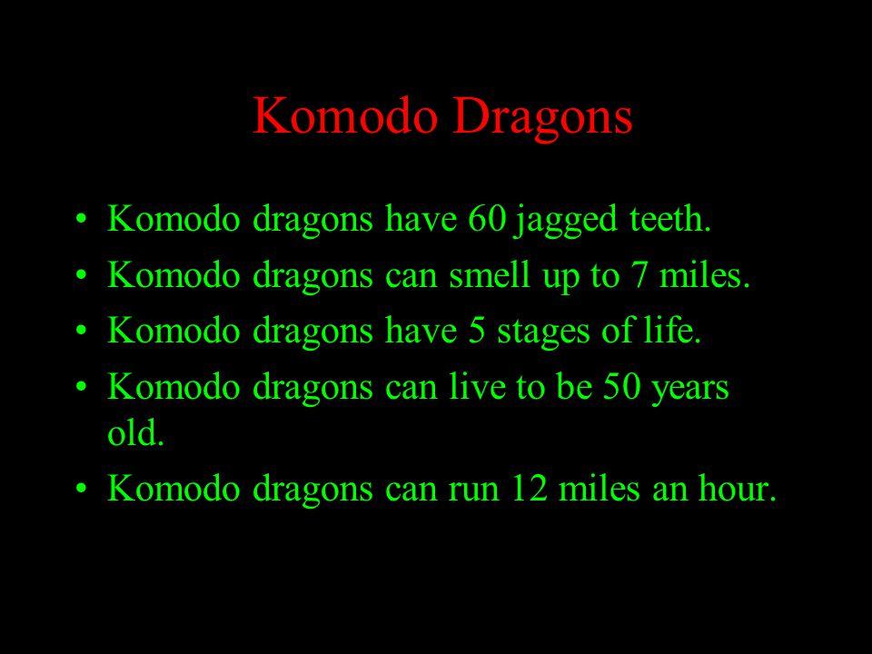 Komodo Dragons Komodo dragons have 60 jagged teeth.