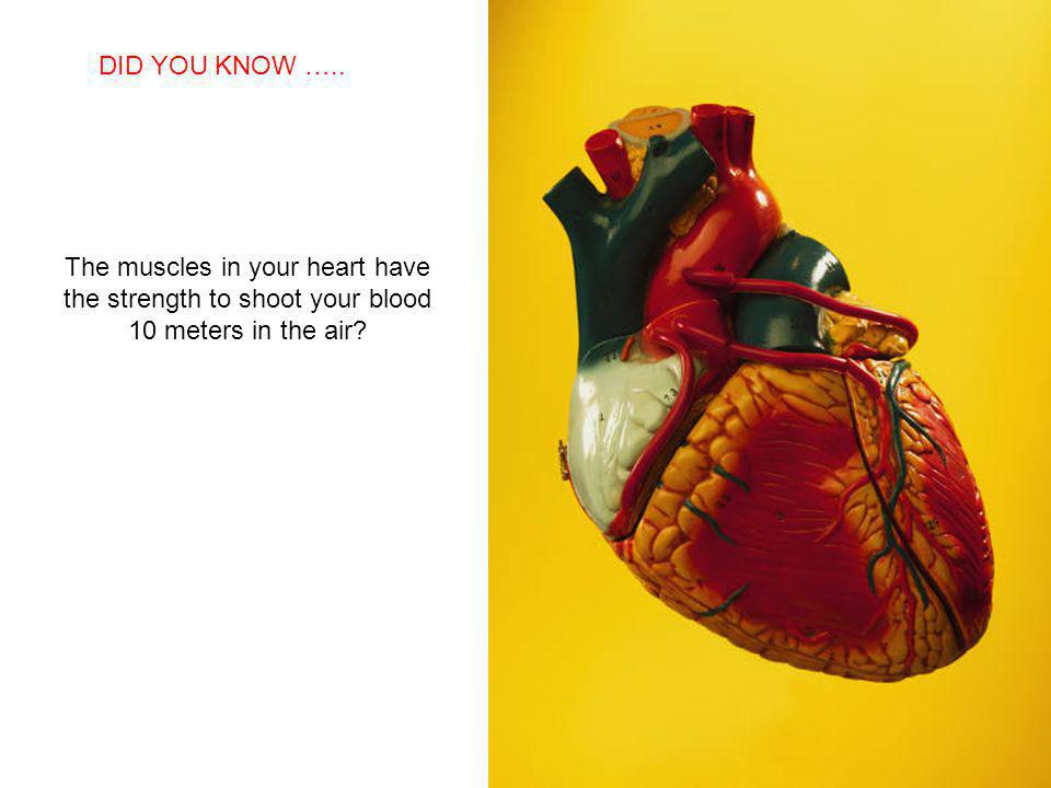 SABIAS QUE… The muscles in your heart have the strength to shoot your blood 10 meters in the air.
