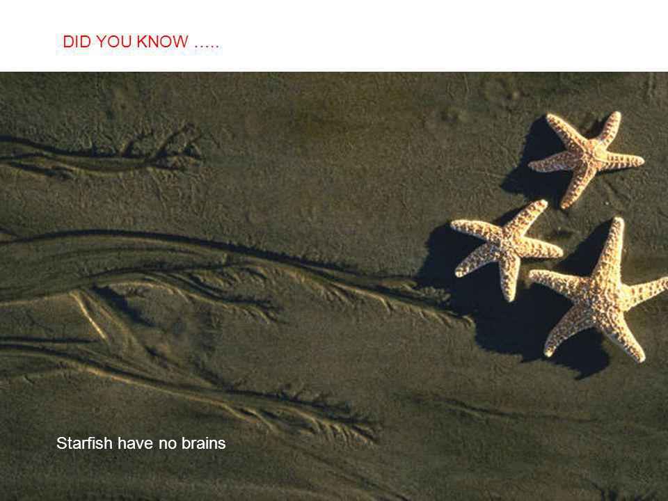 SABIAS QUE… Starfish have no brains DID YOU KNOW …..