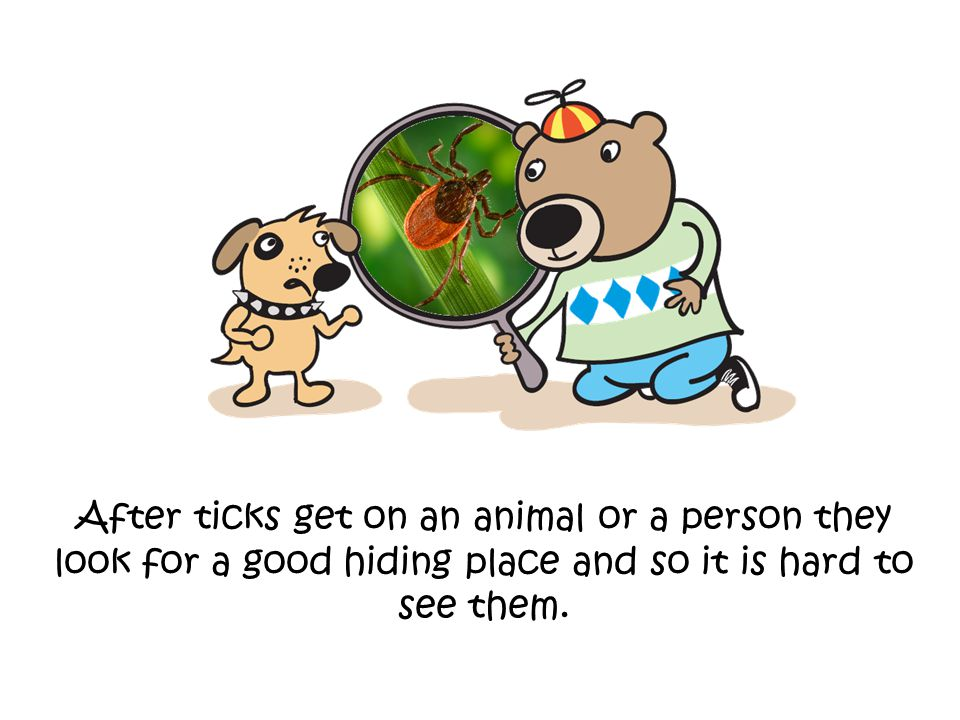 After ticks get on an animal or a person they look for a good hiding place and so it is hard to see them.