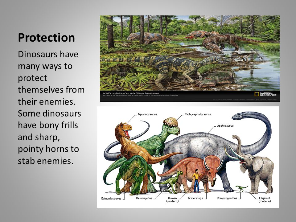 Protection Dinosaurs have many ways to protect themselves from their enemies.