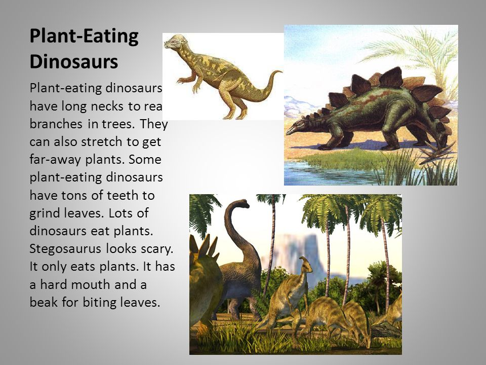 Plant-Eating Dinosaurs Plant-eating dinosaurs have long necks to reach branches in trees. They can also stretch to get far-away plants. Some plant-eat