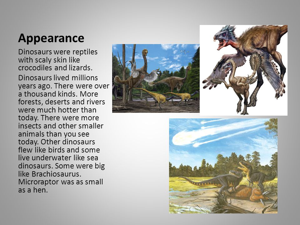 Appearance Dinosaurs were reptiles with scaly skin like crocodiles and lizards.