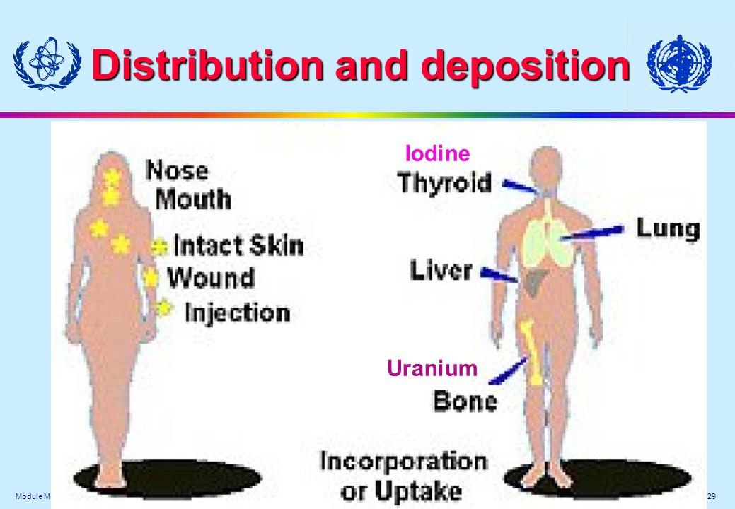 Module Medical XV. - 29 Distribution and deposition Iodine Uranium