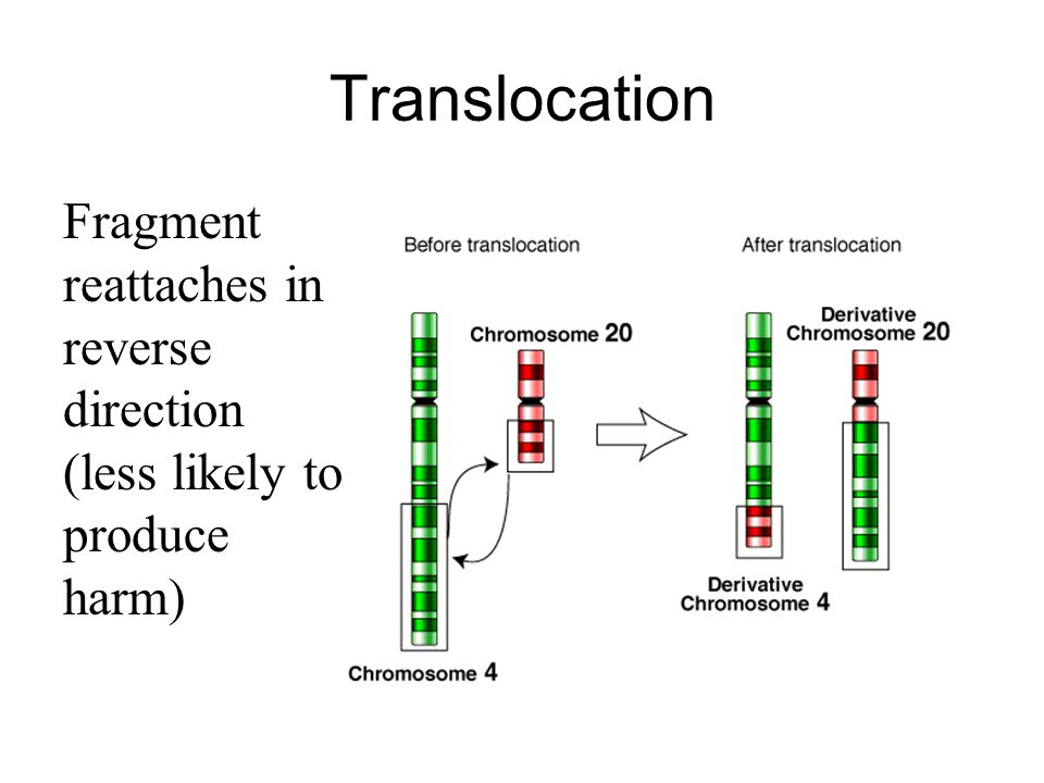 Translocation Fragment reattaches in reverse direction (less likely to produce harm)
