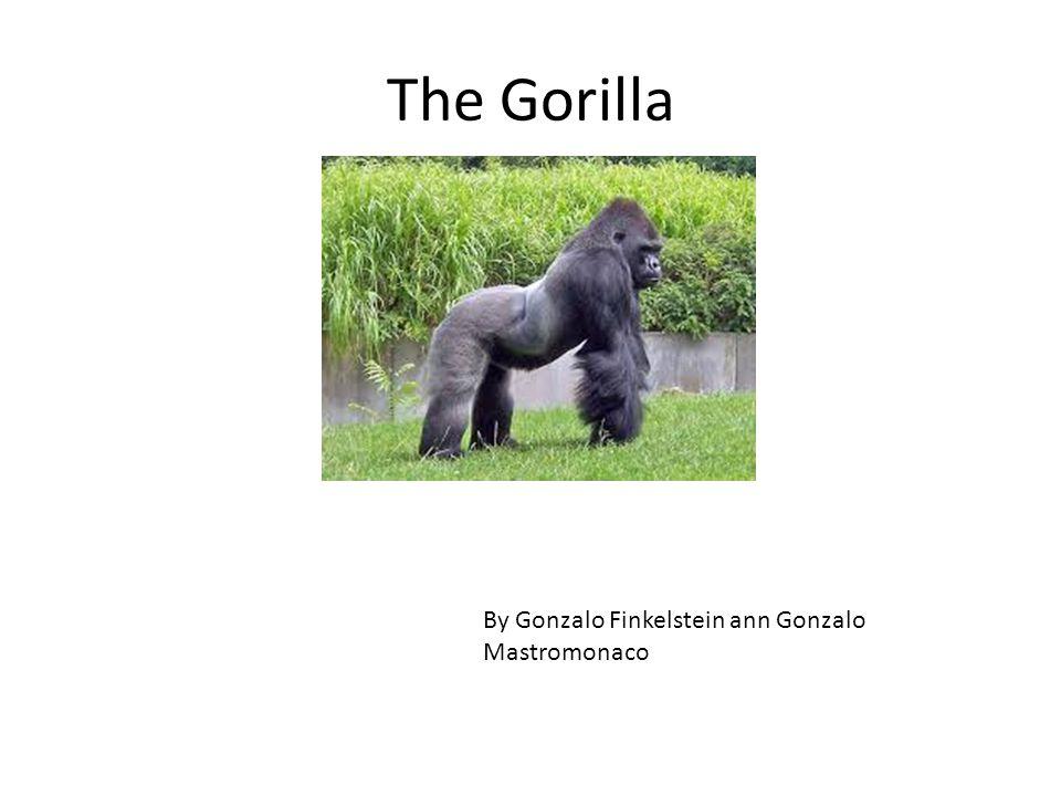 ENDANGERED SPECIES Los alumnos de 7mo junto a la profesora Paola Capresi realizaron un trabajo de investigación sobre determinadas especies en extinción.