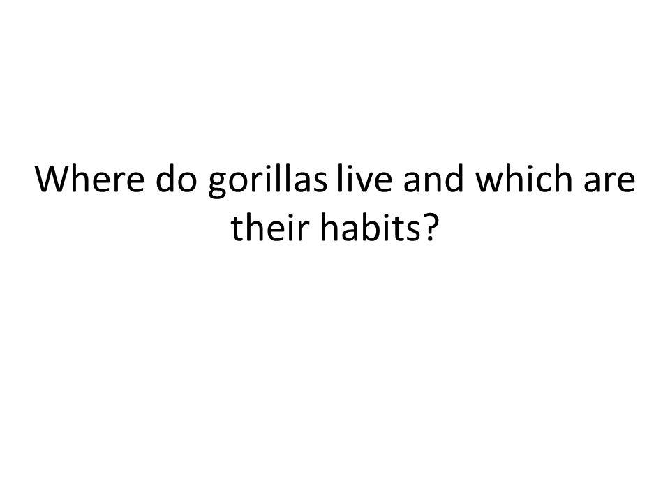 The Gorilla By Gonzalo Finkelstein ann Gonzalo Mastromonaco