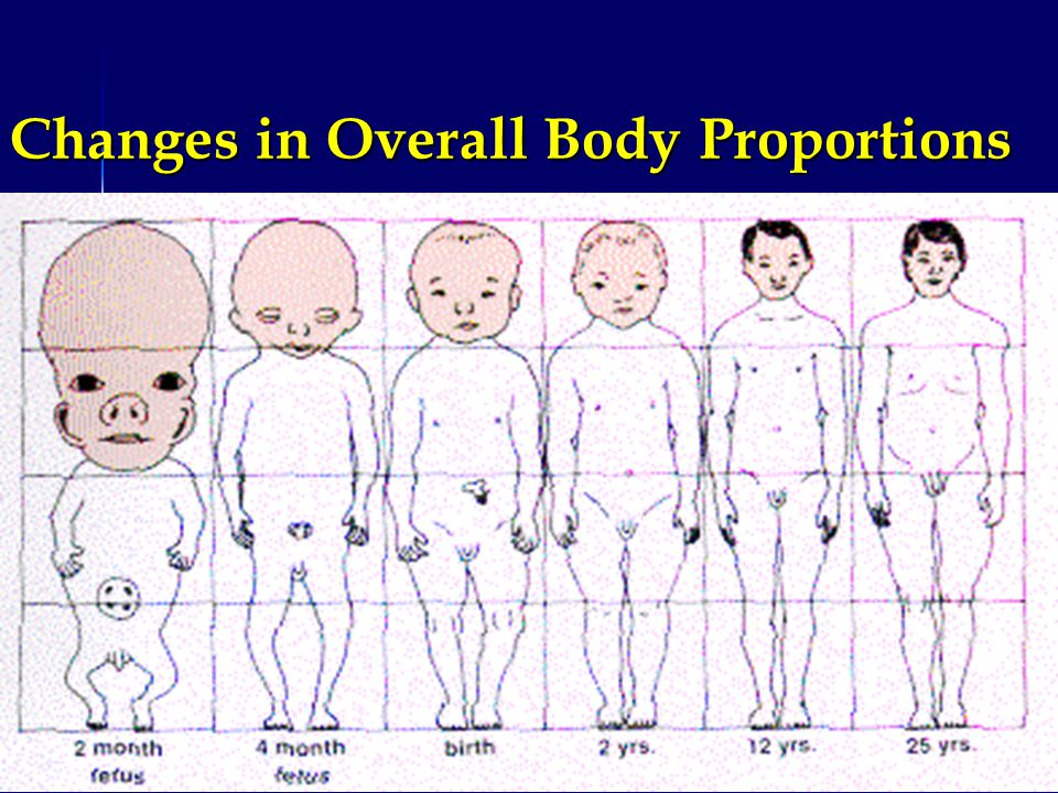 Changes in Overall Body Proportions