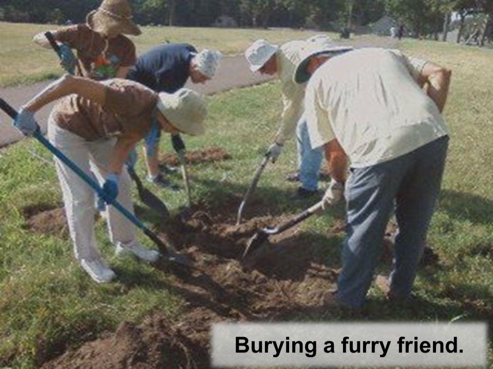 Burying a furry friend.