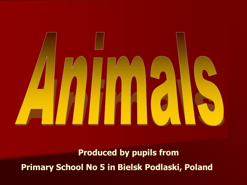 Produced by pupils from Primary School No 5 in Bielsk Podlaski, Poland
