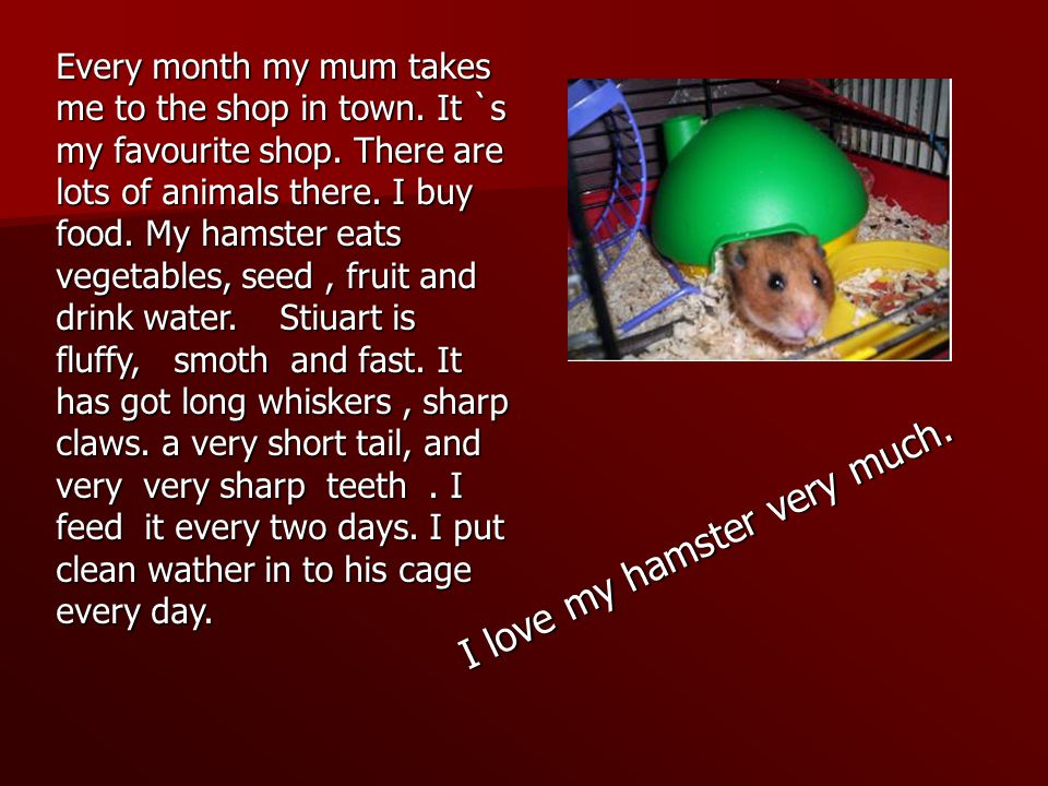I love my hamster very much. Every month my mum takes me to the shop in town.