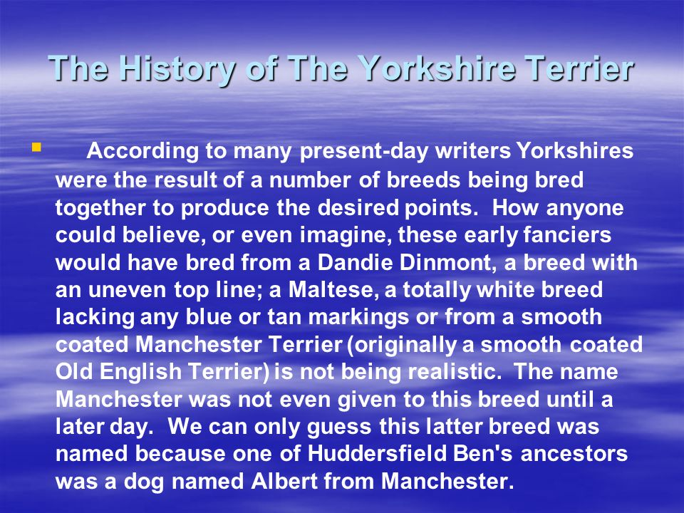 According to many present-day writers Yorkshires were the result of a number of breeds being bred together to produce the desired points.