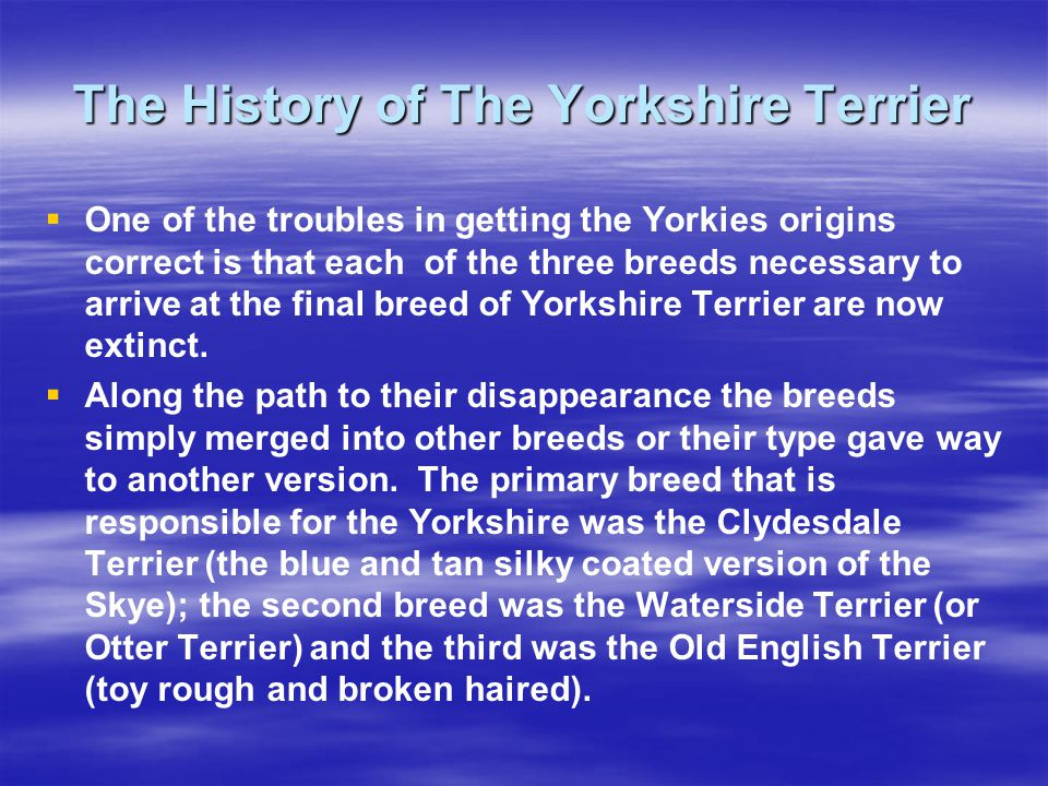 The History of The Yorkshire Terrier One of the troubles in getting the Yorkies origins correct is that each of the three breeds necessary to arrive at the final breed of Yorkshire Terrier are now extinct.