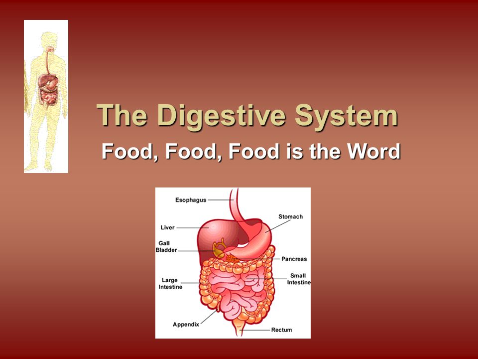 Path of Digestion: Large Intestine Path of Digestion: Large Intestine Removes WATER from undigested chymeRemoves WATER from undigested chyme Lined with bacteria (E.