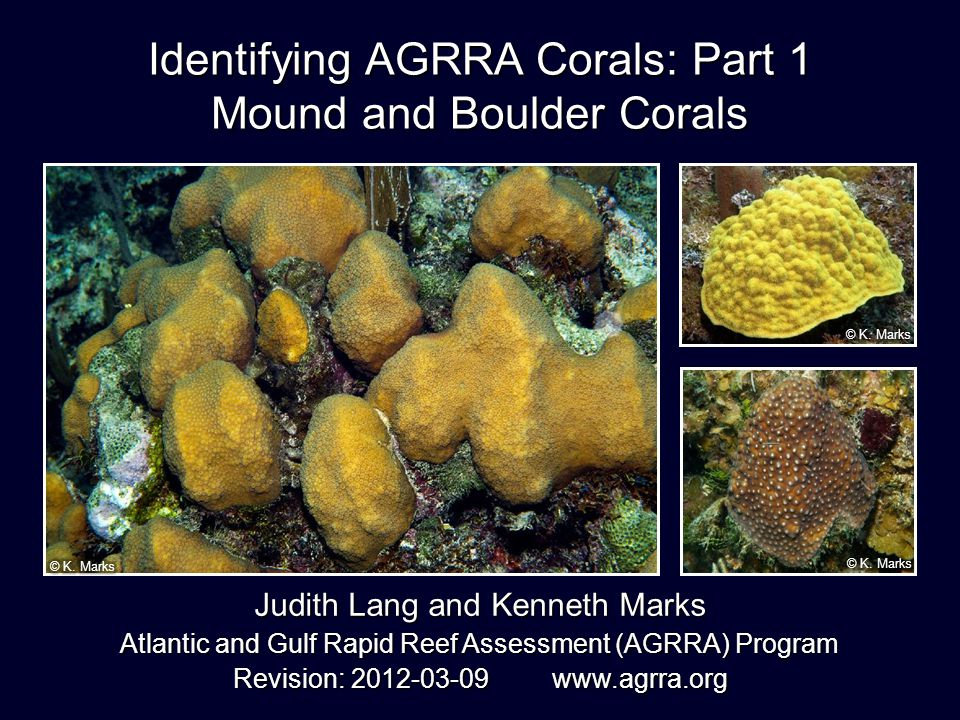 Identifying AGRRA Corals: Part 1 Mound and Boulder Corals Judith Lang and Kenneth Marks Atlantic and Gulf Rapid Reef Assessment (AGRRA) Program Revision: 2012-03-09 www.agrra.org