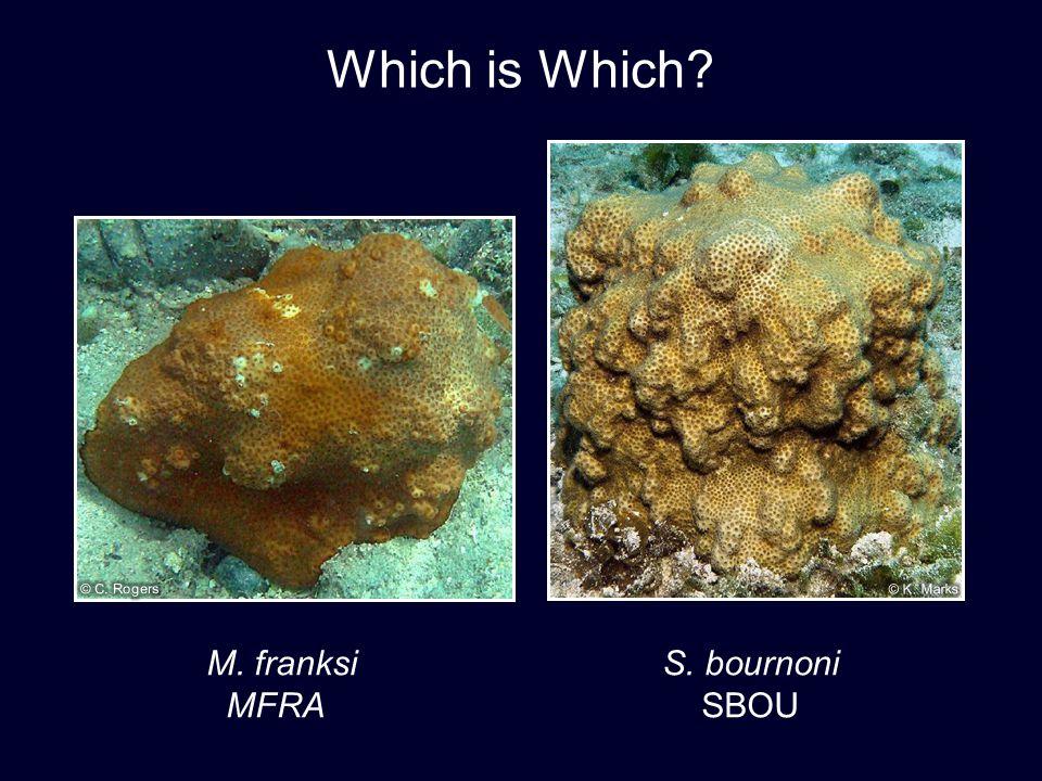 M. franksi S. bournoni MFRA SBOU Which is Which?