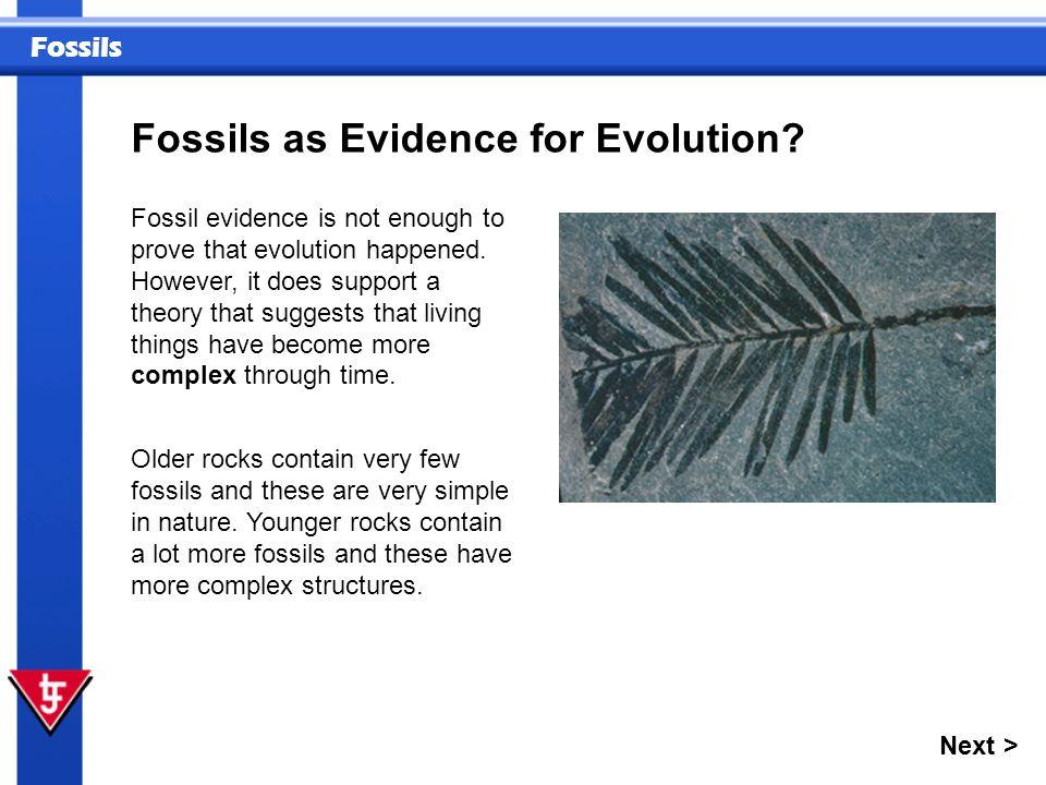 Fossils Next > Hyracotherium to Equus Miocene.
