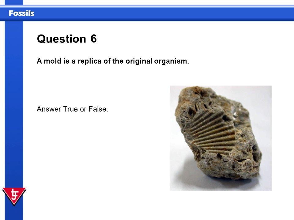 Fossils 6 A mold is a replica of the original organism. Question Answer True or False.