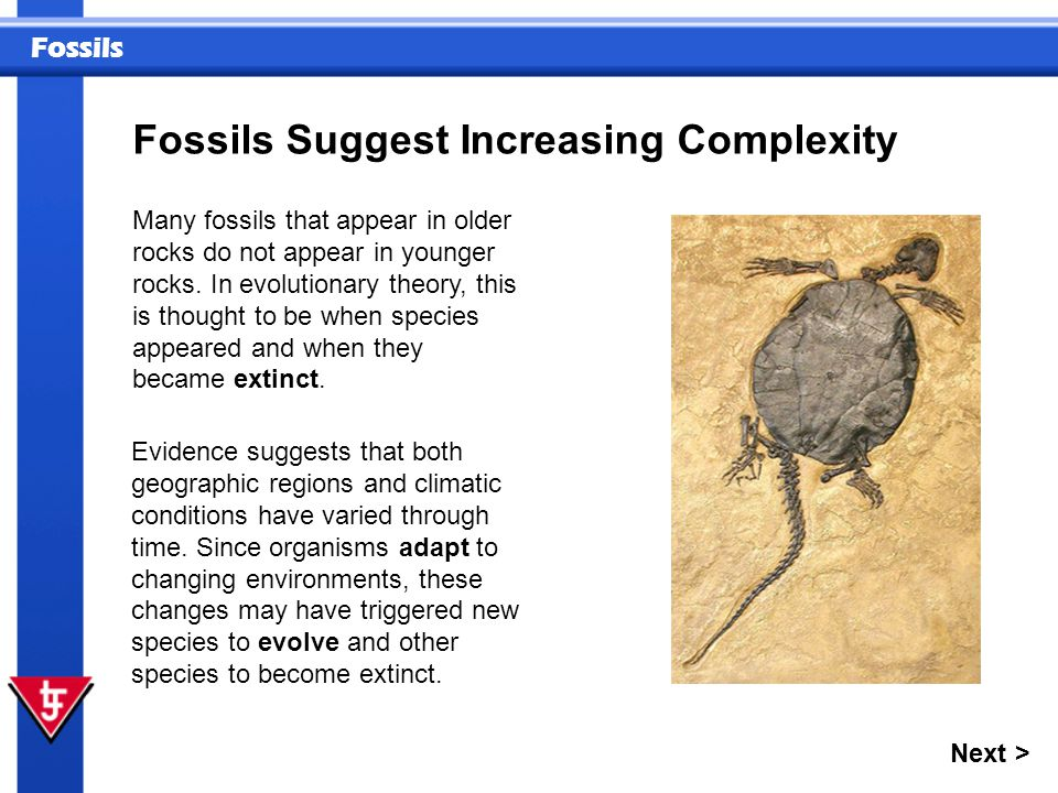 Fossils Fossils Suggest Increasing Complexity Next > Many fossils that appear in older rocks do not appear in younger rocks. In evolutionary theory, t