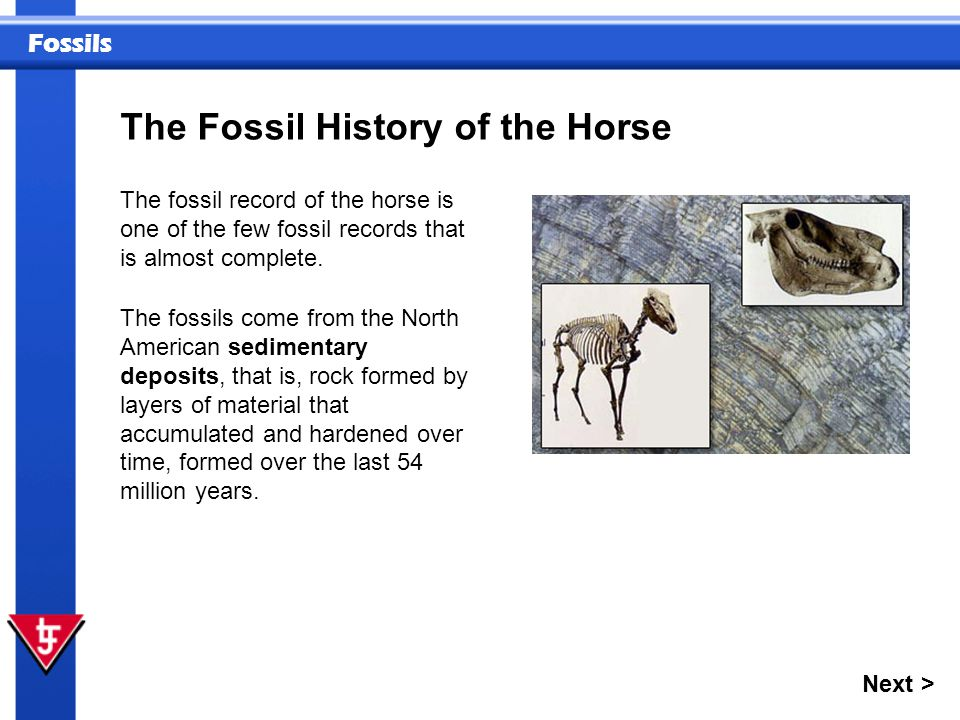 Fossils The Fossil History of the Horse Next > The fossil record of the horse is one of the few fossil records that is almost complete. The fossils co