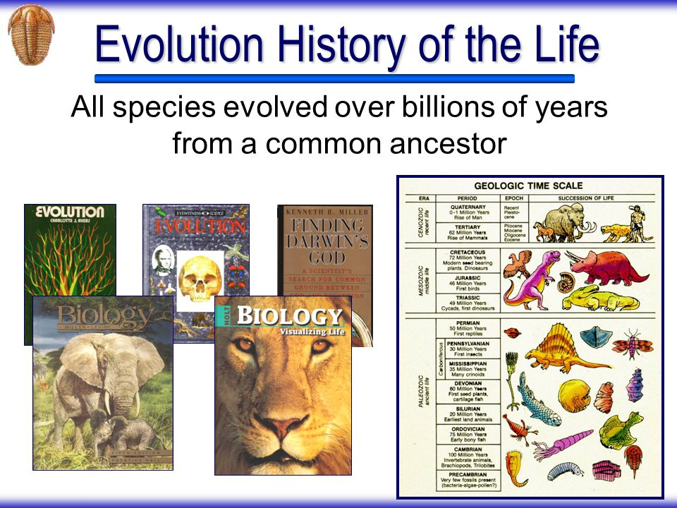 What Textbooks Dont Contain Scientists find fossil horses mixed throughout all the different time layers.