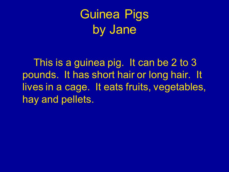 Guinea Pigs by Jane This is a guinea pig. It can be 2 to 3 pounds.