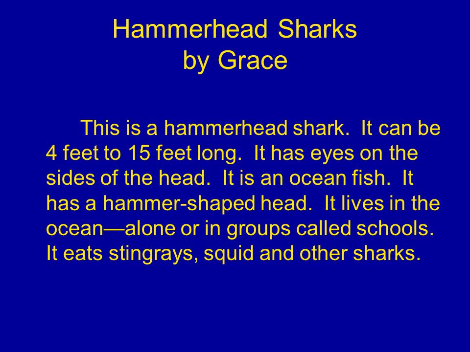 Hammerhead Sharks by Grace This is a hammerhead shark.