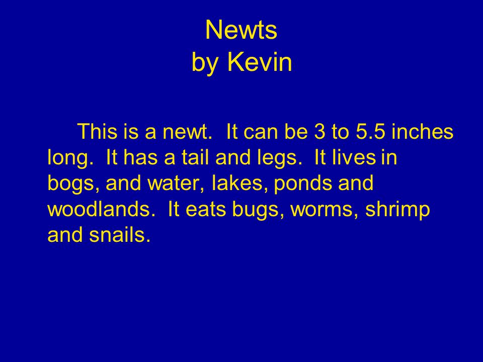 Newts by Kevin This is a newt. It can be 3 to 5.5 inches long.