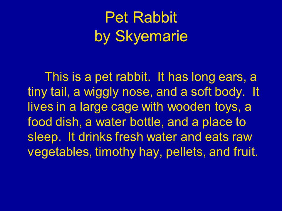 Pet Rabbit by Skyemarie This is a pet rabbit.