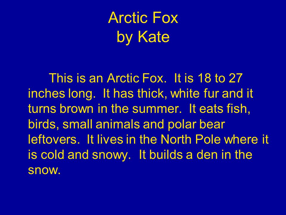 Arctic Fox by Kate This is an Arctic Fox. It is 18 to 27 inches long.