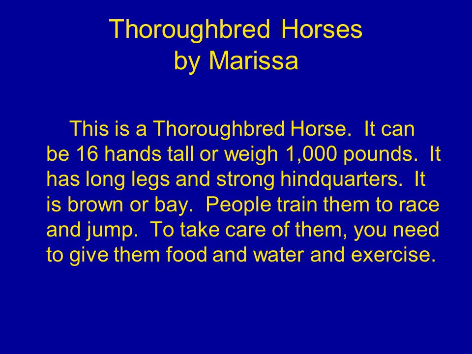 Thoroughbred Horses by Marissa This is a Thoroughbred Horse.
