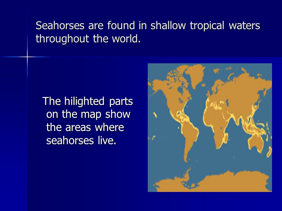 Seahorses are found in shallow tropical waters throughout the world. The hilighted parts on the map show the areas where seahorses live. The hilighted