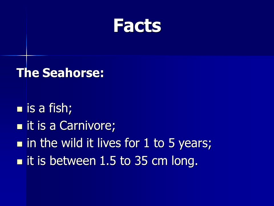 Facts The Seahorse: is a fish; is a fish; it is a Carnivore; it is a Carnivore; in the wild it lives for 1 to 5 years; in the wild it lives for 1 to 5 years; it is between 1.5 to 35 cm long.