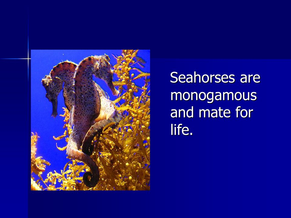 Male seahorses have a pouch on their front-side.Male seahorses have a pouch on their front-side.