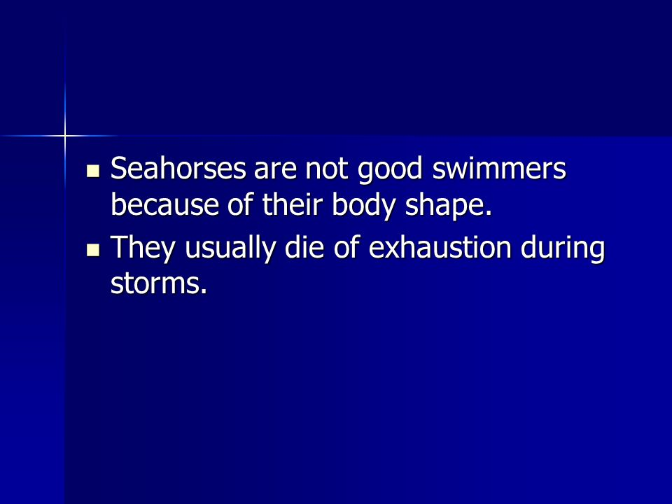 Seahorses are not good swimmers because of their body shape. Seahorses are not good swimmers because of their body shape. They usually die of exhausti