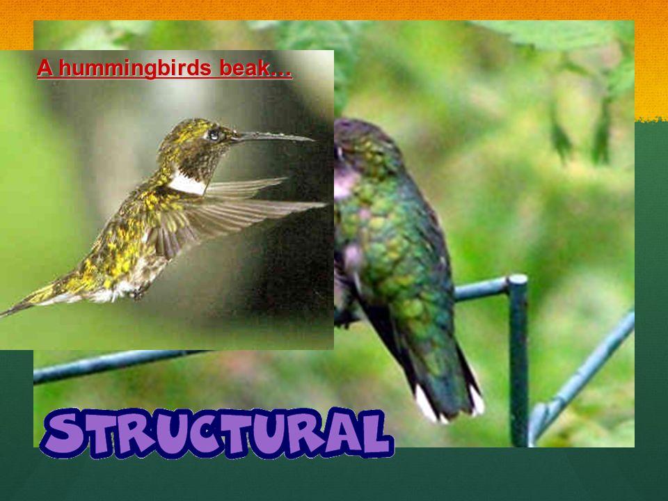 A hummingbirds beak…