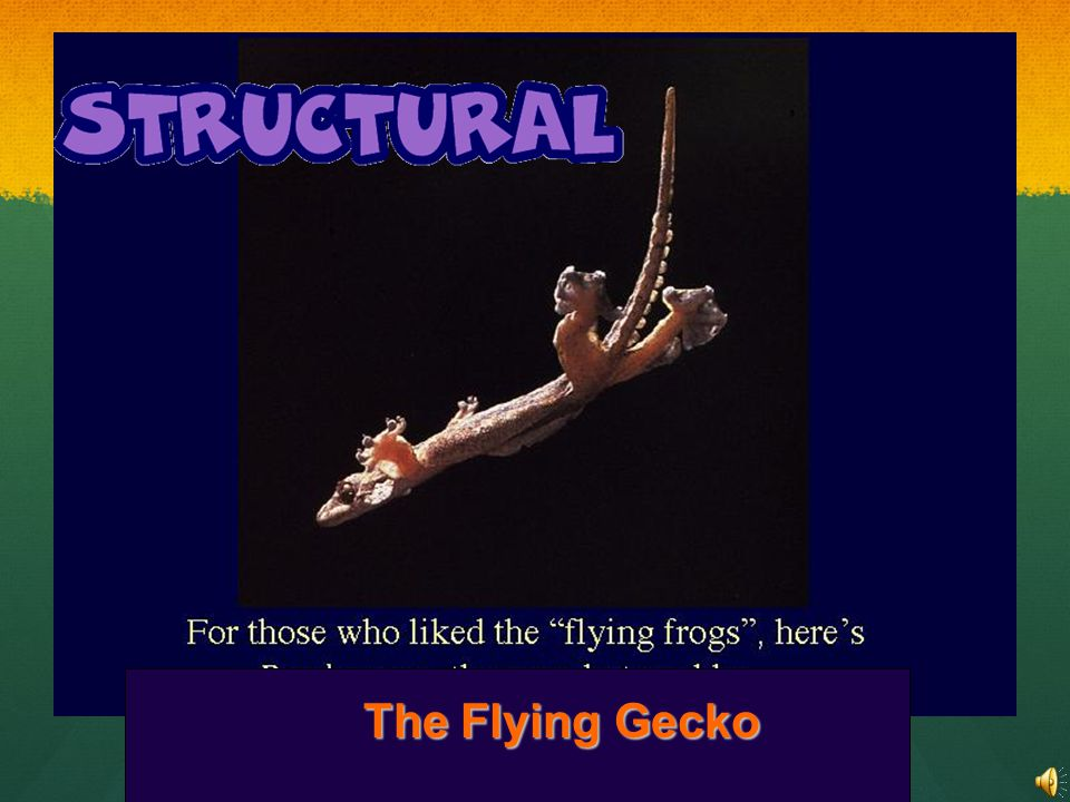 The Flying Gecko