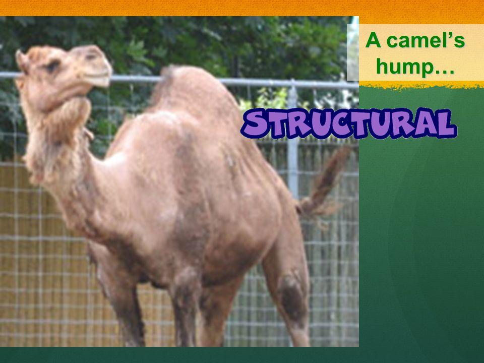 A camels hump…
