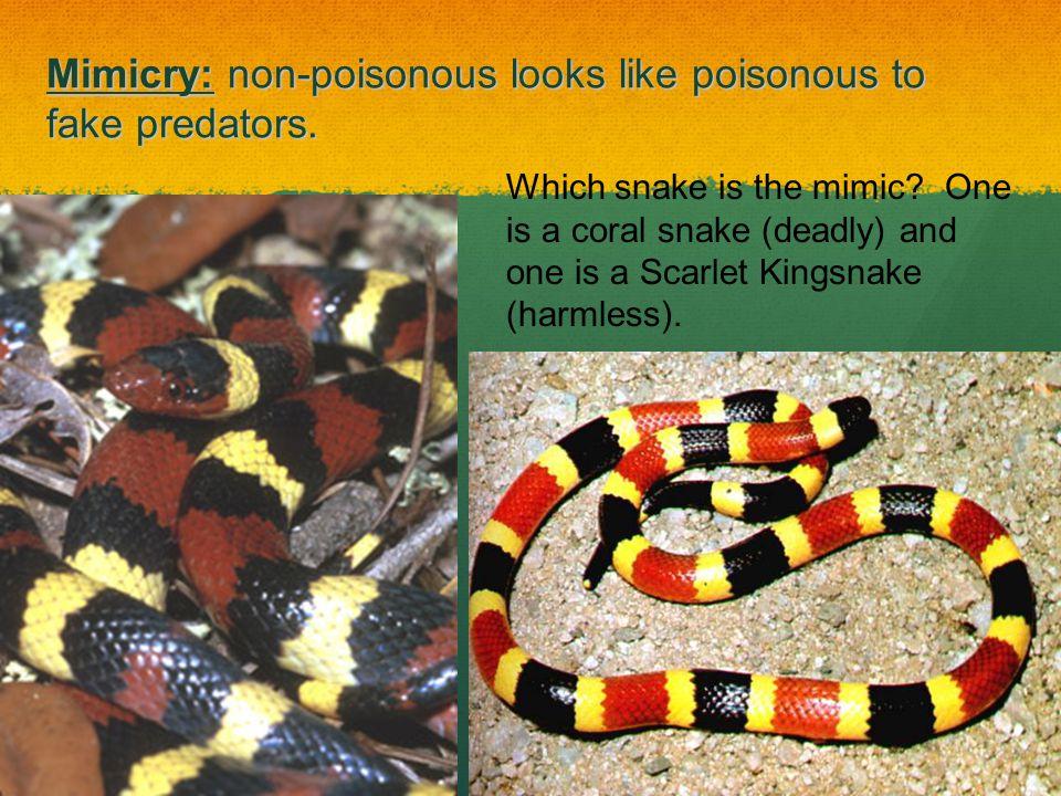 Mimicry: non-poisonous looks like poisonous to fake predators.