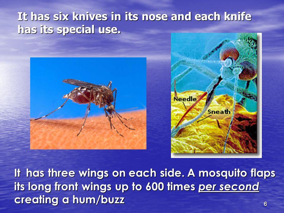 6 It has three wings on each side.