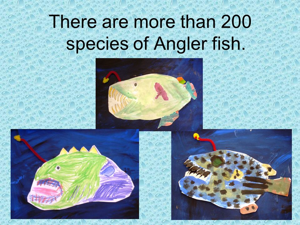 There are more than 200 species of Angler fish.